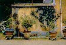 Garden, Lucca, Italy