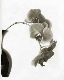 Jill's Orchids