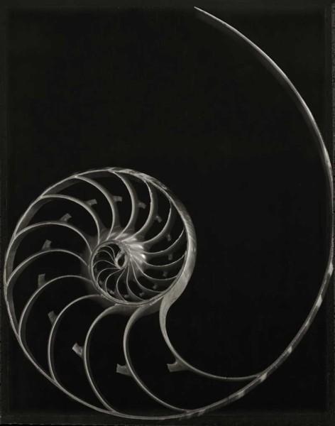 Nautilus Skeleton