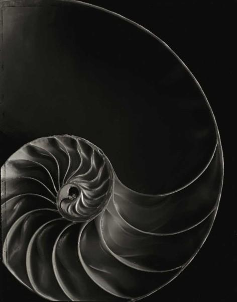 Nautilus Chamber