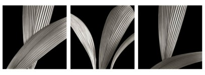 Ribbed Leaves Triptych