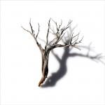 Untitled (sagebrush 4)