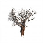 Untitled (sagebrush 5)