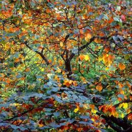 Autumn Circus, Oregon