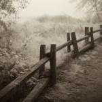 Dusk, Meadow, Henry Cowell Park