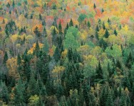 Franconia Hills, New Hampshire