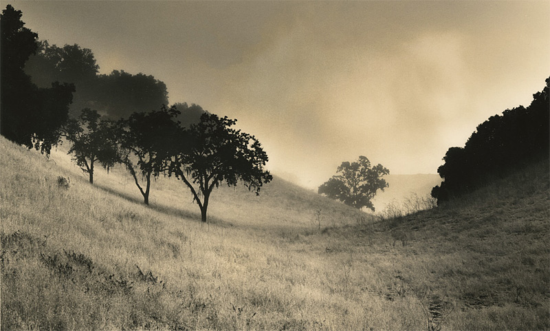 Carmel Valley Mist