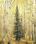 Spruce & Bright Aspen Forest, Colorado