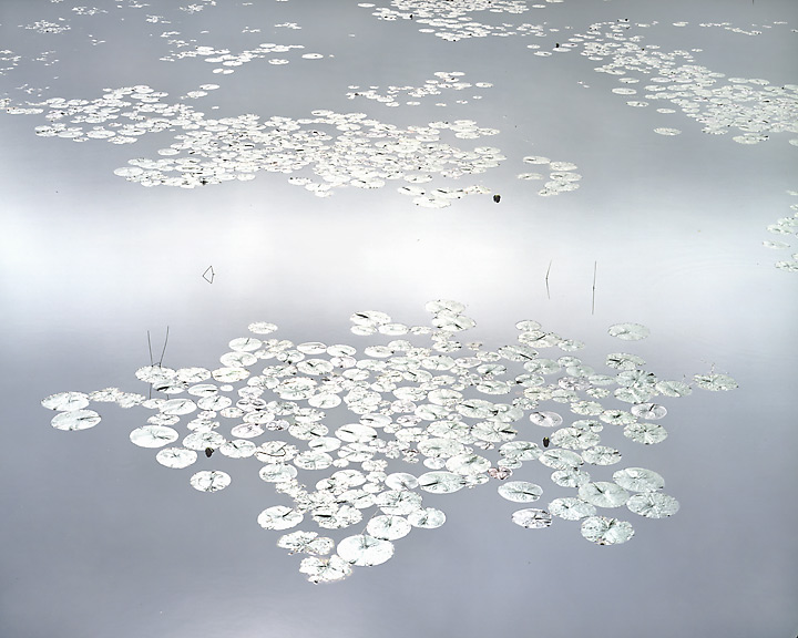 Shining Water Lilies, Maine