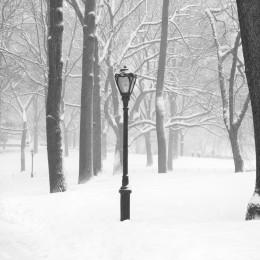 Lamp Post, NYC