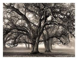Two Hearted Oak