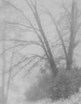 Oaks & Fog, Idywild