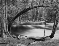 Tenaya Creek & Bowed Tree, Yosemite**