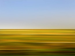 Wildflower1: Yellow Sweet Clover