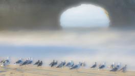 Gulls at Sunrise, Natural Bridges State Beach