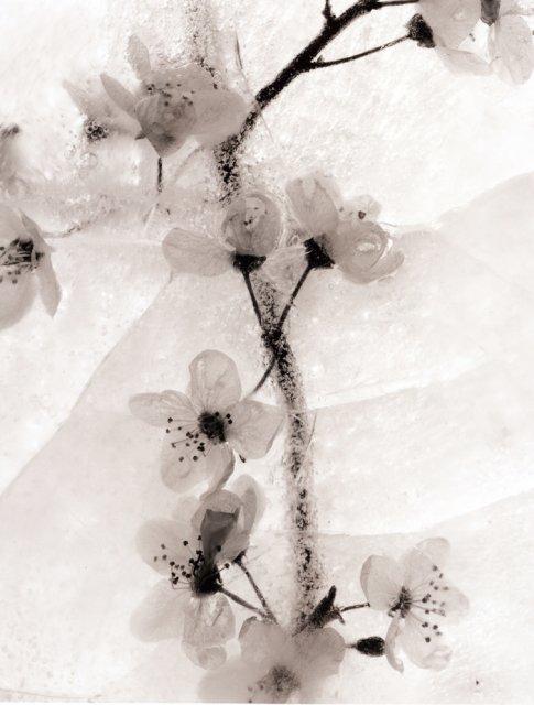 Ice Form 22 by Ryuijie Douglas | Susan Spiritus Gallery