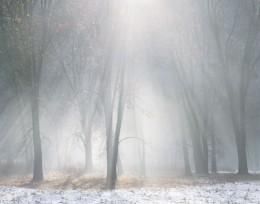 Oaks, Mist, Melting Snow, Yosemite