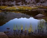 Grasses. Sunrise, Kearsage Lake, Kings Canyon