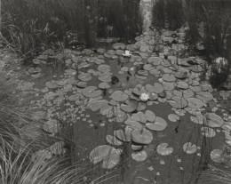 Aquatic Plants #1, Saddle River, NJ