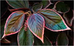 Three Leaf Wall (#0278)