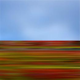 Wildflower19