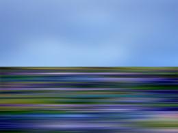 Wildflower21