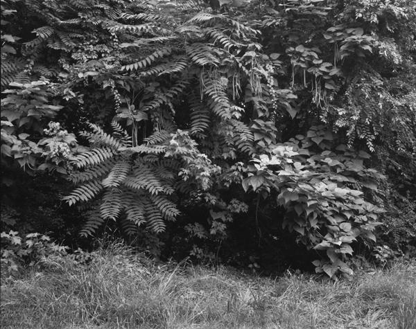 Foliage, Below the Passaic Falls, Paterson, NJ