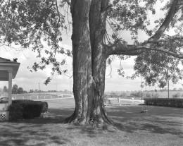 Front Yard, Winslow Farm, Fairmont, IN