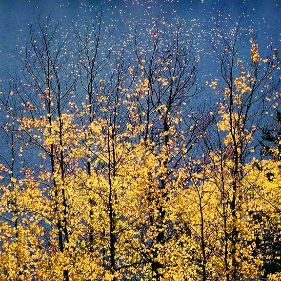 Autumn Aspens & Blue Lake Stars, WY