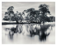 Bare Trees by the River