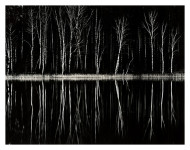 Black Forest, Poland