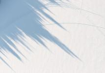 Tree Shadows, Lake Placid, NY