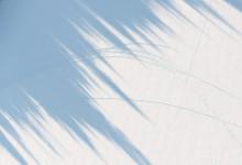 Tree Shadows III, Lake Placid, NY