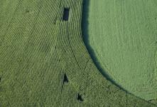 Cornfield Curve near Lyons, NY