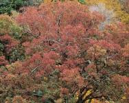 Stormy Red Oak, VA