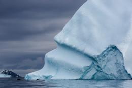 Two Humpback Whales and Iceberg, Cierva Cove