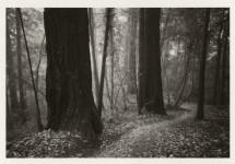 Dawn, Big Bend Trail