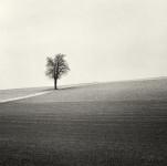 All Alone, Austria