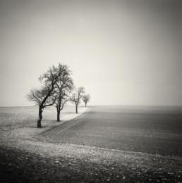 Four Trees, Austria