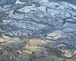 Rice Terraces, Laohuzui I, Yunnan, China