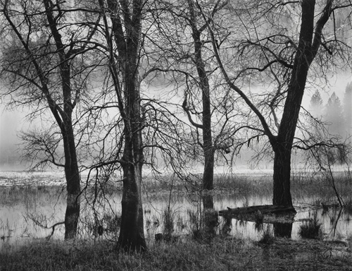 Trees, Valley Fog, Dusk (Sold)