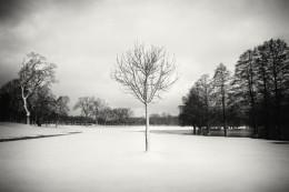 Snow Scene XVI