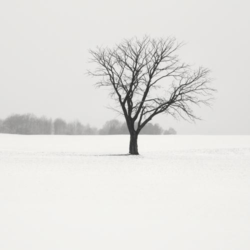 Winter Sketch