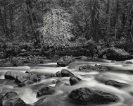 Merced River & Forest, Yosemite (Sold)