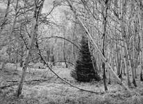 Aspen Dream, Near Ashcroft, CO (Sold)