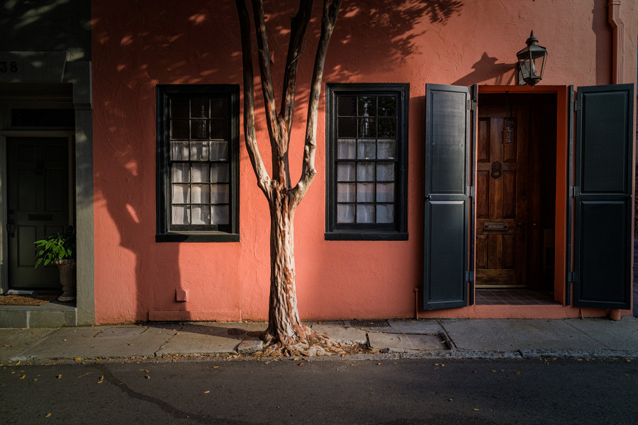 Tree Shadows, Charleston, South Carolina