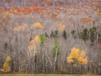 Late Autumn Hillside, Grafton Notch State Park, ME