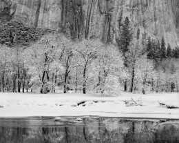 Black Oaks, Merced River and El Capitan, Yosemite
