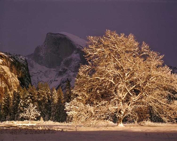 Half Dome and Elm Tree, Winter, Yosemite National Park