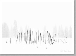 Cattails, Snowstorm, Yosemite